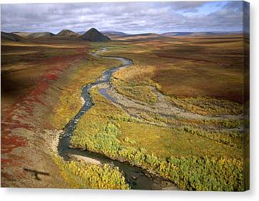 Fall Color On The Central North Slope Canvas Print by Joel Sartore