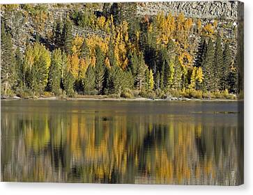 Fall Color Reflection And Tree Canvas Print by Rich Reid