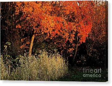 Canvas Print featuring the photograph Fall Colors 2 by Vilas Malankar