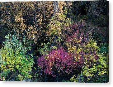 Fall Colors Alaska Canvas Print by Gary Rose
