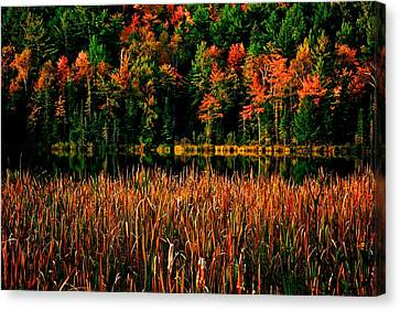 Fall Colors Canvas Print by Andre Faubert