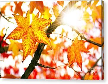 Fall Colors Canvas Print by Carlos Caetano
