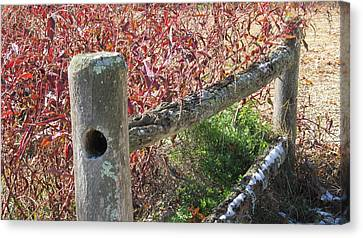Fall Colors On The Fence Canvas Print