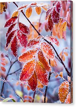 Fall Colors Canvas Print by Richard W Turenne