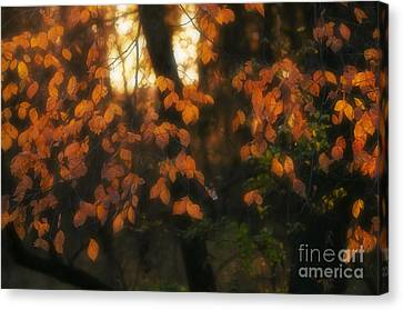 Canvas Print featuring the photograph Fall Colours by Art Whitton