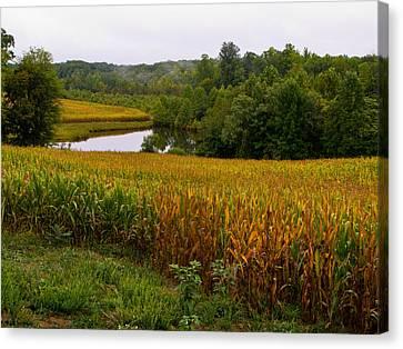Fall Corn In Virginia Countryside Canvas Print by Richard Singleton