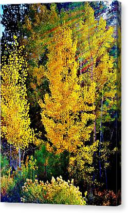 Fall Fantasy Canvas Print by Ellen Heaverlo