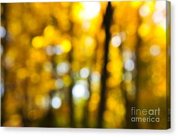 Nature Abstract Canvas Print - Fall Forest In Sunshine by Elena Elisseeva