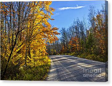Fall Forest Road Canvas Print by Elena Elisseeva