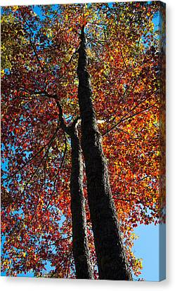 Fall From Above Canvas Print by David Patterson