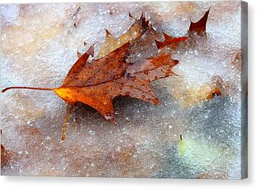 Canvas Print featuring the photograph Fall Frost by Patrice Zinck