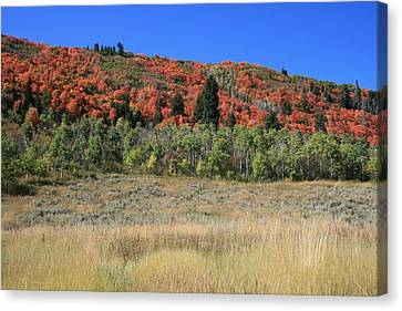 Fall In Park City Canvas Print