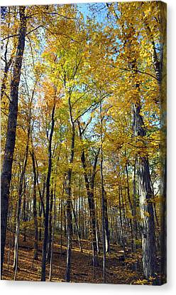 Fall In The Forest 2 Canvas Print by Marty Koch