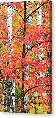 Fall Layers II Canvas Print by Adam Pender