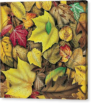 Fall Leaf Study Canvas Print