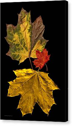 Fall Leave Art Canvas Print by Mario Perez