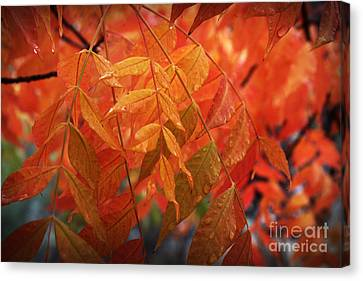 Fall Leaves In Gold Canvas Print
