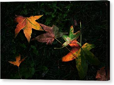 Fall Leaves On Grass Canvas Print