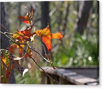 Canvas Print featuring the photograph Fall by Lou Belcher
