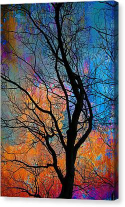 Fall Magic Canvas Print by David Clanton
