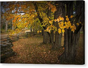 Fall Maple Leaf Trees With Split Rail Fence Canvas Print by Randall Nyhof