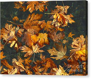 Autumn Leaf On Water Canvas Print - Fall Maple Leaves On Water by Sharon Talson