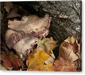 Fall Mushrooms Canvas Print by Wilma  Birdwell