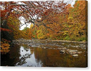 Fall On Laurel Hill Creek Canvas Print by Dan Myers