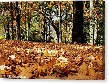 Canvas Print featuring the photograph Fall On The Ground by Rachel Cohen