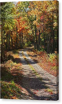 Fall On The Wyrick Trail Canvas Print by Denise Romano