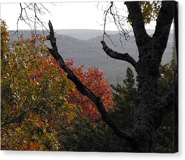 Fall Picture In Texas Canvas Print by Rebecca Cearley