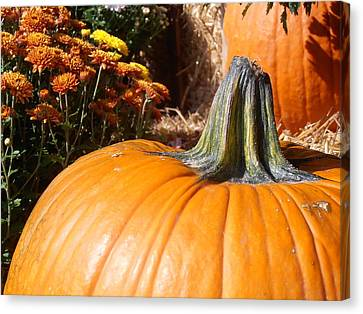 Farm Stand Canvas Print - Fall Pumpkin by Kimberly Perry