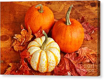 Canvas Print featuring the photograph Fall Pumpkins And Decorative Squash by Verena Matthew