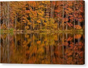 Fall Reflection Canvas Print by Karol Livote