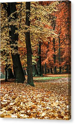 Fall Scenery Canvas Print by Hannes Cmarits
