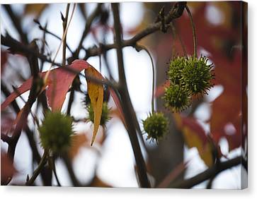 Canvas Print featuring the photograph Fall Seeds by Lisa Missenda