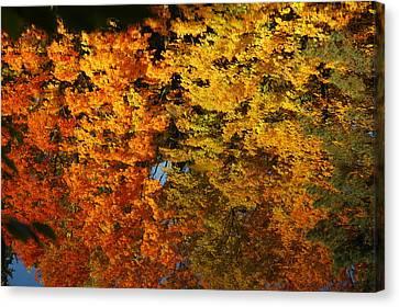 Nature Center Pond Canvas Print - Fall Textures In Water by LeeAnn McLaneGoetz McLaneGoetzStudioLLCcom