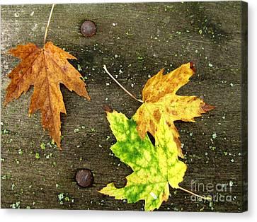 Green Lichen Canvas Print - Fall Trio by Marilyn Smith