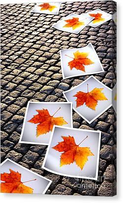 Fallen Autumn  Prints Canvas Print by Carlos Caetano