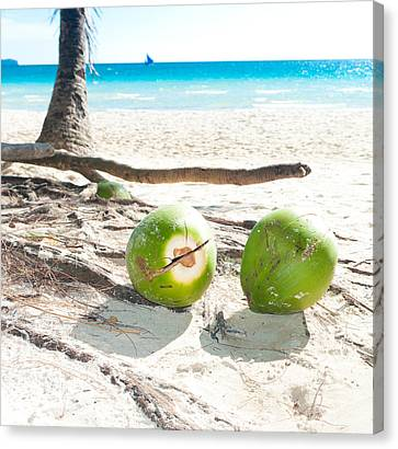 Fallen Coconuts Canvas Print by Hans Engbers