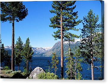 Fallen Leaf Lake Area With Pine Trees In Foreground, Lake Tahoe, California, Usa Canvas Print by Ellen Skye