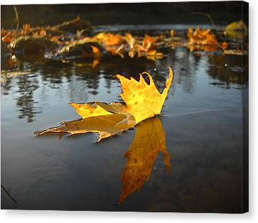 Fallen Maple Leaf Reflection Canvas Print