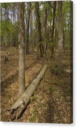 Fallen Tree In Forest Canvas Print by M K  Miller
