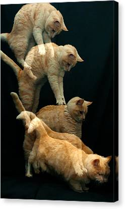 Canvas Print - Falling Cat by Micael  Carlsson