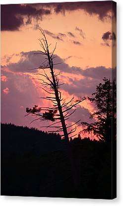 Falling Into The Sunset Canvas Print by Mandi Howard