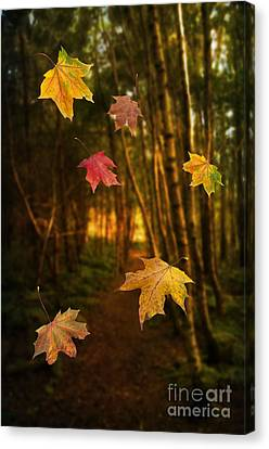 Falling Leaves Canvas Print by Amanda Elwell
