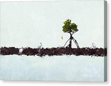 Falling Mangrove Leaf Canvas Print by Dan Friend