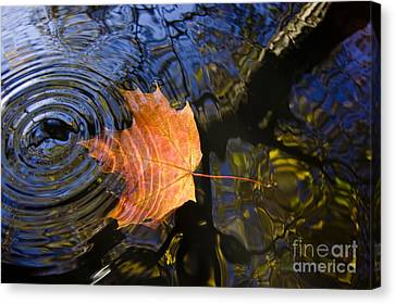 Falling To The Water Canvas Print by Michal Boubin