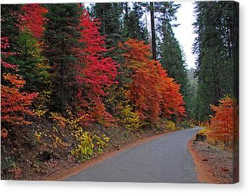 Canvas Print featuring the photograph Fall's Splendor by Lynn Bauer