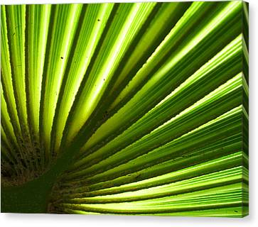 Canvas Print featuring the photograph Fan Frond by Ginny Schmidt